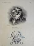 D'ARG.... by Honoré Daumier