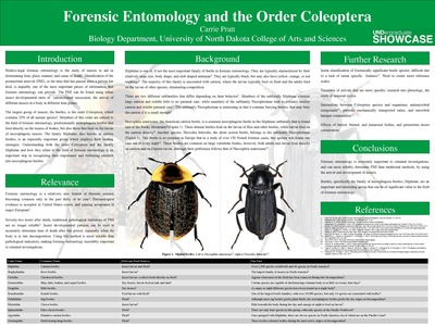 Forensic Entomology And The Order Coleoptera By Carrie Pratt
