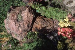 Garden Rock Closeup by James Smith Pierce