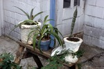 Three Potted Plants on a Sawhorse by James Smith Pierce