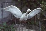 Goose in Flight by James Smith Pierce