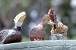 Ducks in a Row by James Smith Pierce