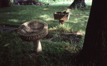 Side view of two birdbaths that line the walking path to the porch by James Smith Pierce