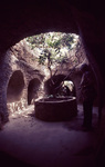 Citrus Tree in Underground Planter by James Smith Pierce