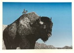 Buffalo Butte by Ryan Burr