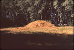 (003) Mound August 1971 by James Smith Pierce